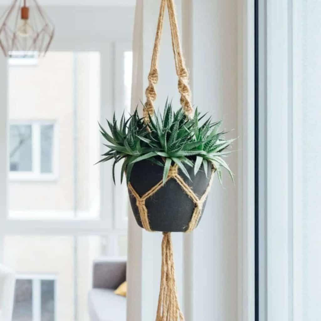 Hanging indoor plant in front of a window.